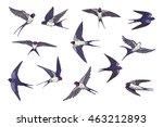 Stock vector swallow bird color set 463212893