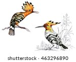 bright birds on branches with... | Shutterstock . vector #463296890