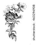 Hand Drawn Garden Rose Flower...