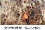 Macro Spotted Gum Tree Bark