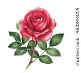 Stock photo watercolor illustration of rose flower 463344059