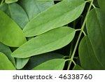 full frame background of fresh... | Shutterstock . vector #46338760