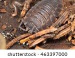 woodlouse | Shutterstock . vector #463397000