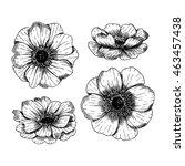 Anemone Flowers. Vintage Vecto...