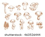 delicious edible mushrooms... | Shutterstock .eps vector #463526444