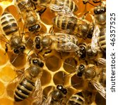 Macro Of Working Bee On...