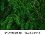 image of fluffy fir needle as... | Shutterstock . vector #463635446