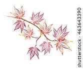 Autumn Japanese Maple  Acer...