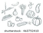 vector set hand drawn... | Shutterstock .eps vector #463752410