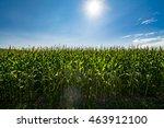 corn field farming background... | Shutterstock . vector #463912100