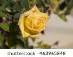 fragrant romantic beautiful... | Shutterstock . vector #463965848