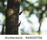 Stag Beetles On Tree