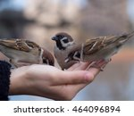 hand ride sparrow | Shutterstock . vector #464096894