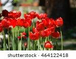 red tulips | Shutterstock . vector #464122418