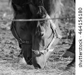 Horse Love  Desaturated Image