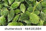 bitter gourd   Shutterstock . vector #464181884