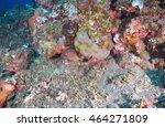 moray eel | Shutterstock . vector #464271809