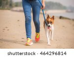 Stock photo walking a dog on the beach 464296814