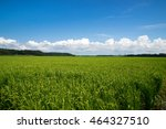 lush green rice field  | Shutterstock . vector #464327510
