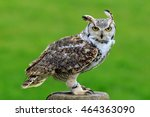 Great Horned Owl Perched On A...