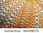 Urchin Background
