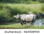 greater one horned rhinoceros... | Shutterstock . vector #464508944