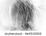 feather wool dark black and... | Shutterstock . vector #464510303