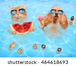 Stock photo cat and dog wearing sunglasses relaxing in the sea red cat eats watermelon and dog eats ice cream 464618693