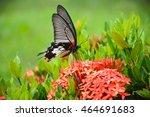 Butterfly On Flower Great...
