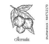 acerola fruit  barbados cherry. ... | Shutterstock .eps vector #464712170