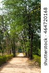 nature beauty path dirt track... | Shutterstock . vector #464720168
