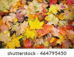 Background From Colorful Autum...