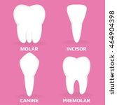Four Different Types Of Teeth....