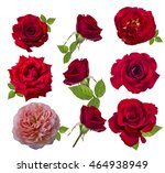 Stock photo red rose isolated on the white background 464938949