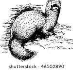 choloepus didactylus   Shutterstock .eps vector #46502890