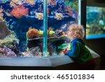 Little Boy Watching Tropical...