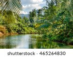 Small photo of Coconut palm trees and casuarinaceae trees growing along the small river, blue sky and bright tropics of Thailand