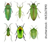 Insects Green Collection ...