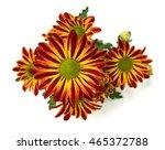 calendula | Shutterstock . vector #465372788