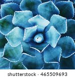agave plant leaves | Shutterstock . vector #465509693