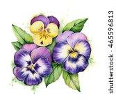 Hand Drawn Watercolor Pansies....