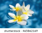 three tropical frangipani... | Shutterstock . vector #465862169