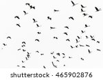 flying bird | Shutterstock . vector #465902876