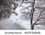 Snow Forest 5