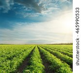 agricultural field with green... | Shutterstock . vector #465990533