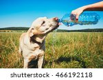 hot day with dog. thirsty...   Shutterstock . vector #466192118