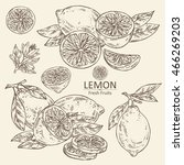collection of lemon . hand drawn | Shutterstock .eps vector #466269203