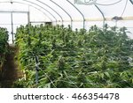 commercial marijuana grow... | Shutterstock . vector #466354478
