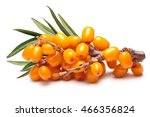 Branch Of Sea Buckthorn Berrie...