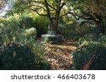 Tree Bench In Natural Garden I...
